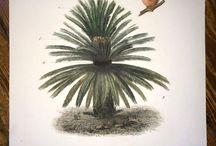 bitki 2 (açık tohumlular)