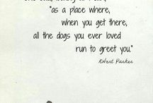 dogs ❤
