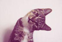 Animals / by Liz Sisco