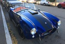 # Shelby #
