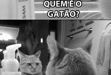 gatos miau....
