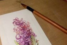 hyacinth watercolor
