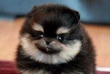 ~fur babies