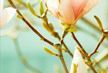 flower / collar