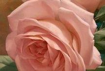 Rosa salmon