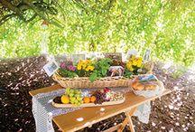 Sukkot / News, food, events etc. regarding the Jewish Holiday of Sukkot / by Baltimore Jewish Times