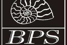 Bps marmi / Da oltre 30 anni BPS rappresenta un marchio storico nel territorio versiliese, nazionale ed estero per la lavorazione di marmi, graniti e pietre