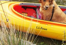 Kayaking / by Mary Lanzel-Springer