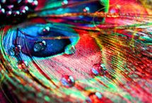 Color / by Katy Maier