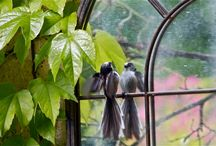Clins d'oeil photographiques / Ici, des photographes nous offrent leur regard sur la nature bourguignonne !