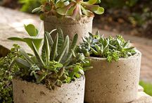 Flowers pots for Pool decoration