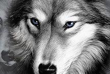 Lobos lindos