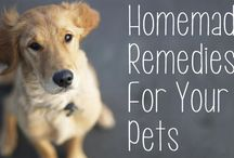 Pet's - Home Remedies