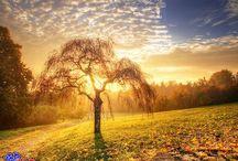 Stromy , větve