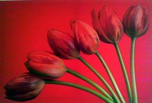 6 Red Tulips