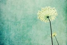 Dandelion - best pins go to patterns that inspire me board