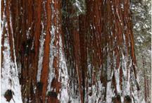 Yosemite Info