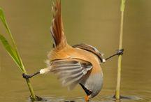 Aves / Flexibilidad