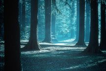 DeEp DARK Woods / Woods, Forests, Mountains, Nature, Night, Dark, Deep