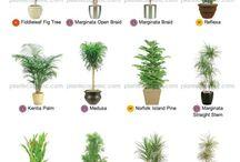 Indoor plants....