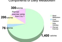 Components of Daily Metabolism