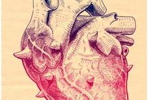 Anatomy / by Mary Alexander