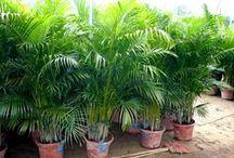 Plantes d'intérieures