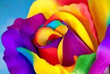 vibrant color nomenklatur