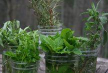 herbs / by Angie Leedy
