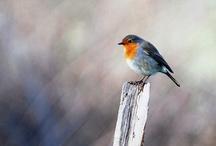 birdies saytweet