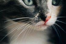 tatlı minnoşlar / kediler