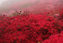 красный лес японии