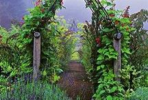 Garden of Wonderland / Because in a perfect world, I have a huge organic veg patch, fruit trees, and a meandering cobblestone path through a lush cottage garden, bursting with poppies in every color imaginable. / by J.J. Johnson