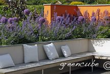 California Dreaming Garden / orange feature wall, alliums, nepeta, granite paving, modern garden design with some traditional plants, greencube garden