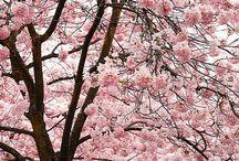 Bomen en bloemen
