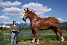 Horses for my Ele