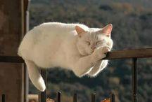 Slapende katten <3 / Slapende katten, een van de mooie 'dingen' van het leven..