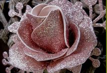 Rose in fommy