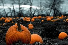 Missing Fall / by Olivia Knaby