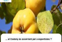 Codony / Membrillo / Aquí trobaràs curiositats sobre el codony / Aquí encontrarás curiosidades sobre el membrillo