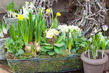 Floristry Spring - kevät kukat ja istutukset
