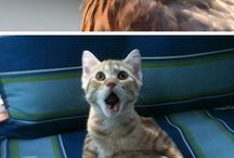 shocked animals