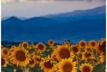Travel Colorado Dreamin / by Sandra Alexander