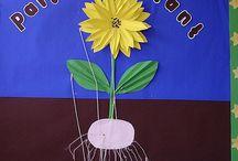Plants Ks2 Teaching
