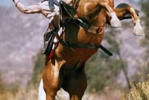 western passion