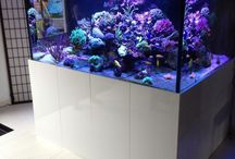 Awesome Fish Tanks