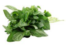 Organic Herbs / Lush images of beautiful, natural organic herbs