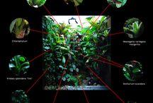 vivarium plant