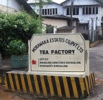 Sri Lanka Tea Farms / by International Tea Farms Alliance