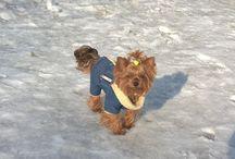 Jessie / The Yorkshire Terrier